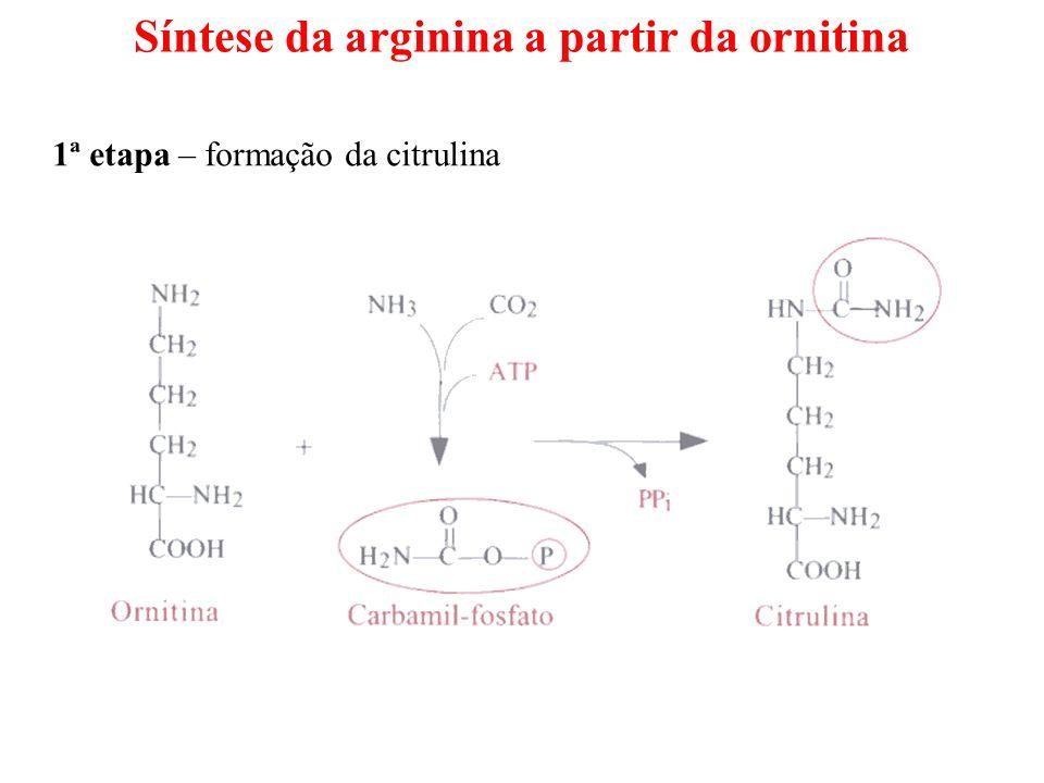 Síntese da arginina a partir da ornitina