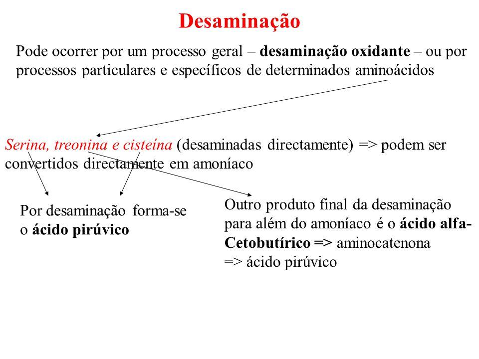 Desaminação Pode ocorrer por um processo geral – desaminação oxidante – ou por. processos particulares e específicos de determinados aminoácidos.