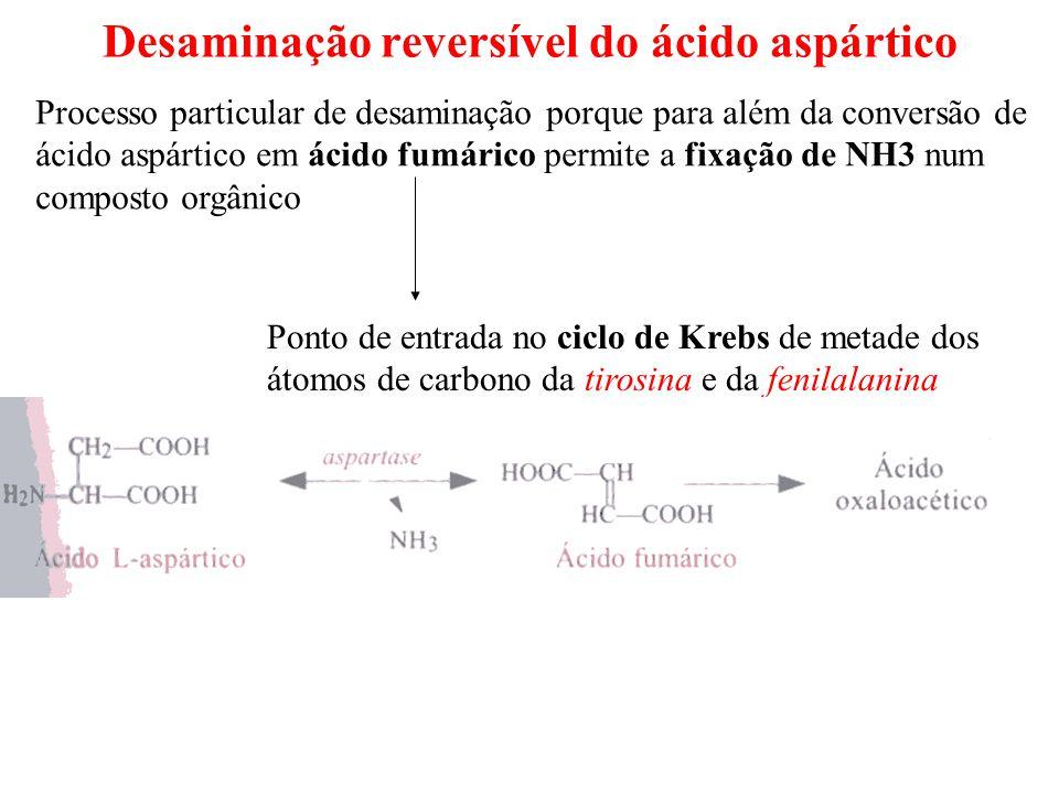 Desaminação reversível do ácido aspártico