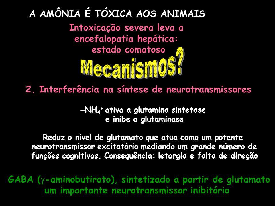Mecanismos A AMÔNIA É TÓXICA AOS ANIMAIS Intoxicação severa leva a