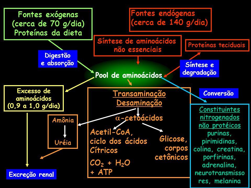 Fontes exógenas Fontes endógenas (cerca de 70 g/dia)
