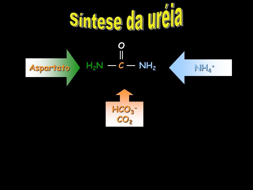 Síntese da uréia O C Aspartato NH4+ H2N NH2 HCO3- CO2