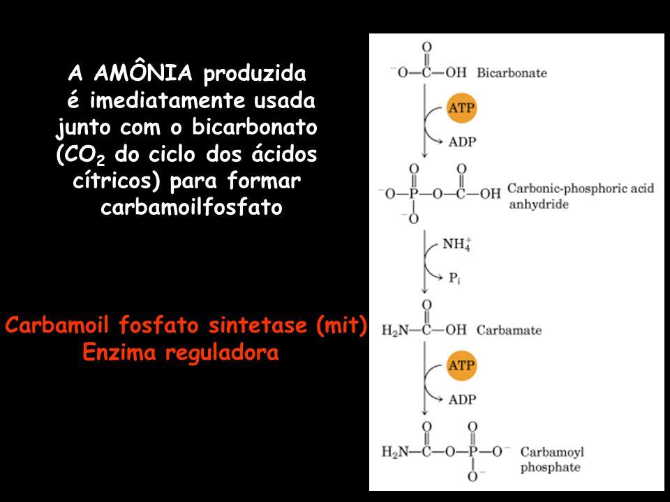 junto com o bicarbonato Carbamoil fosfato sintetase (mit)