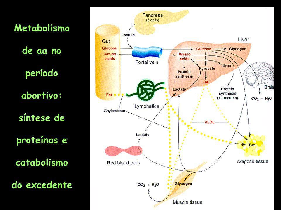 Metabolismo de aa no período abortivo: síntese de proteínas e catabolismo do excedente