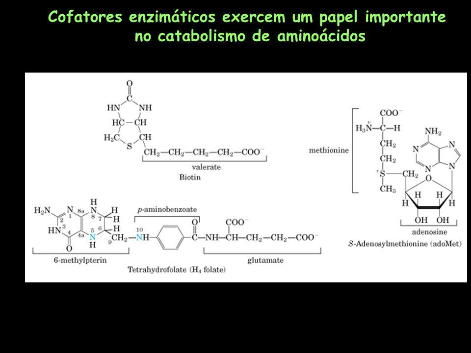 Cofatores enzimáticos exercem um papel importante
