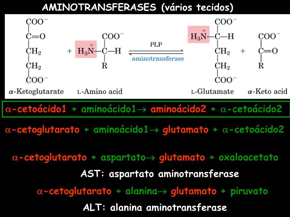 AMINOTRANSFERASES (vários tecidos)