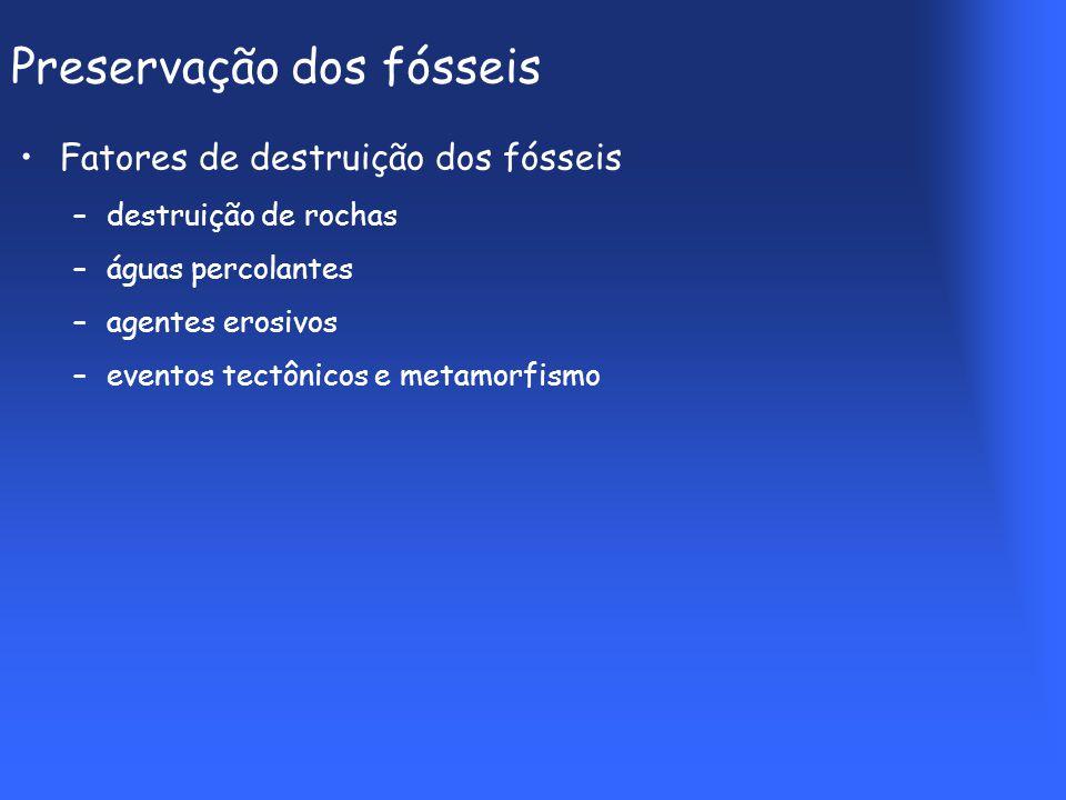 Preservação dos fósseis