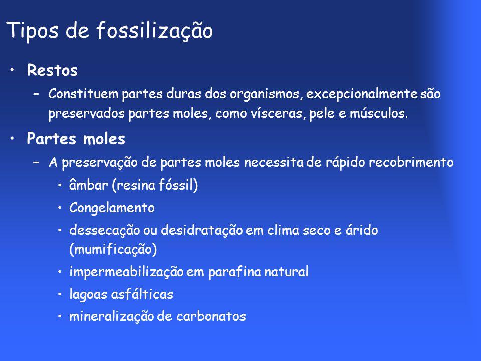 Tipos de fossilização Restos Partes moles