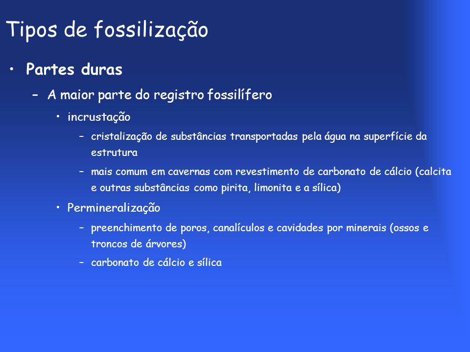 Tipos de fossilização Partes duras