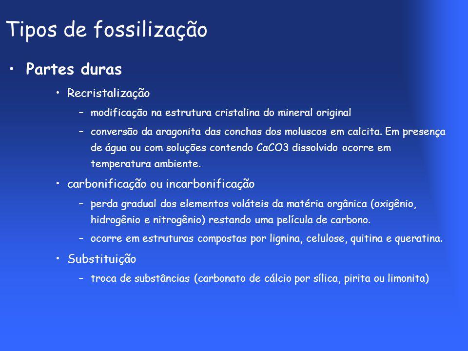 Tipos de fossilização Partes duras Recristalização