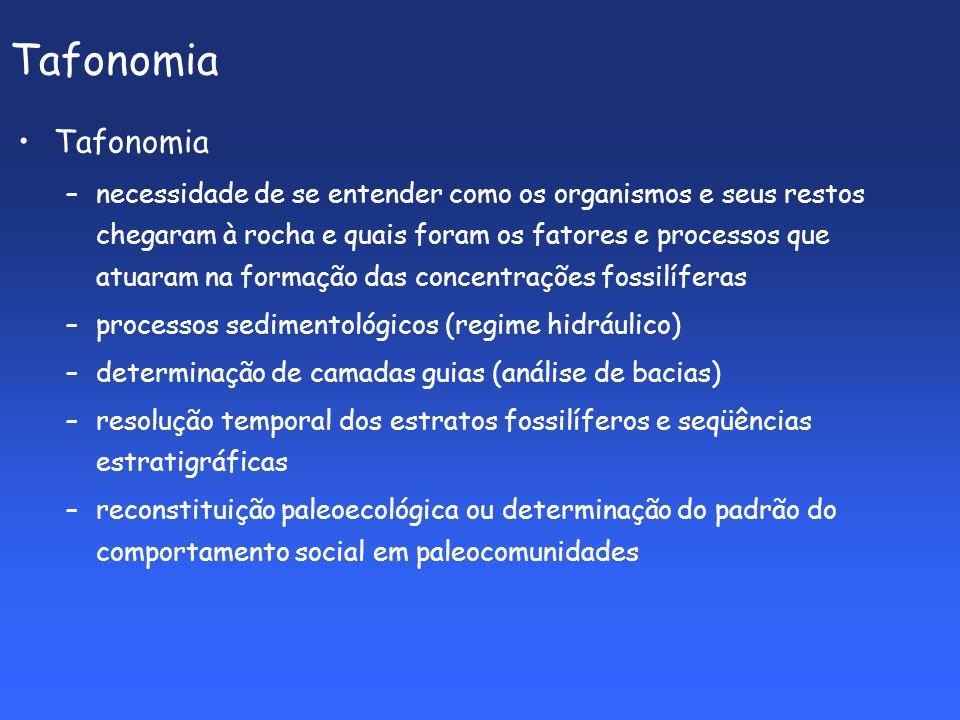 Tafonomia Tafonomia.