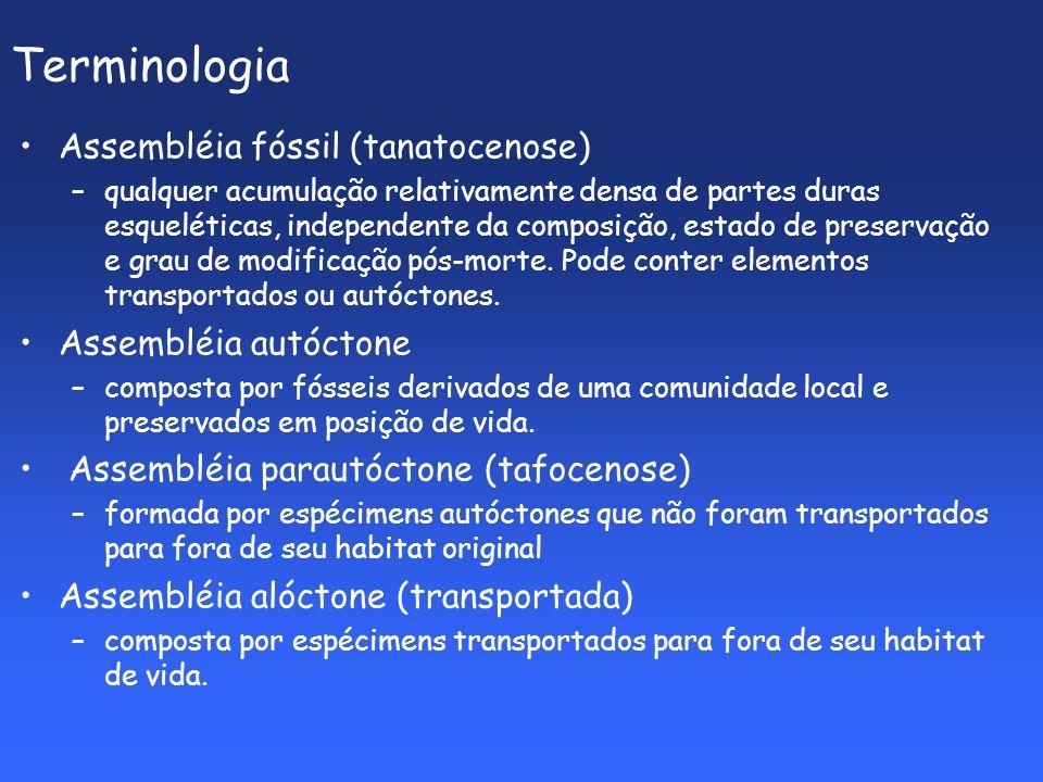 Terminologia Assembléia fóssil (tanatocenose) Assembléia autóctone
