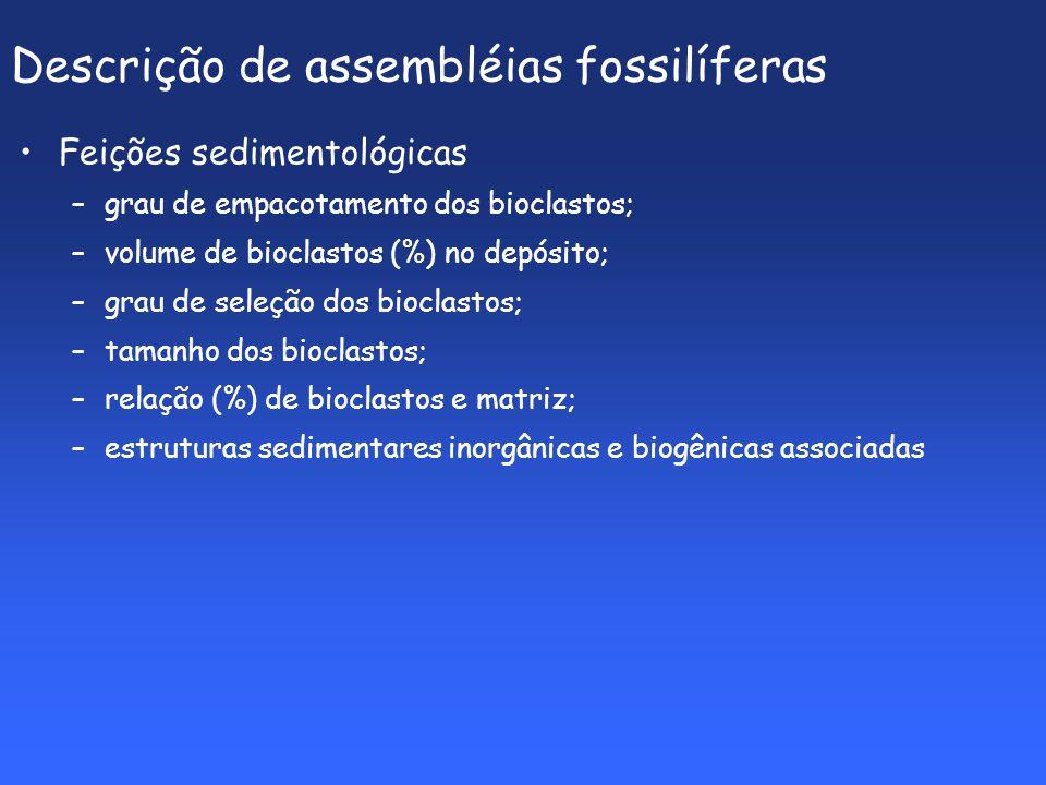 Descrição de assembléias fossilíferas