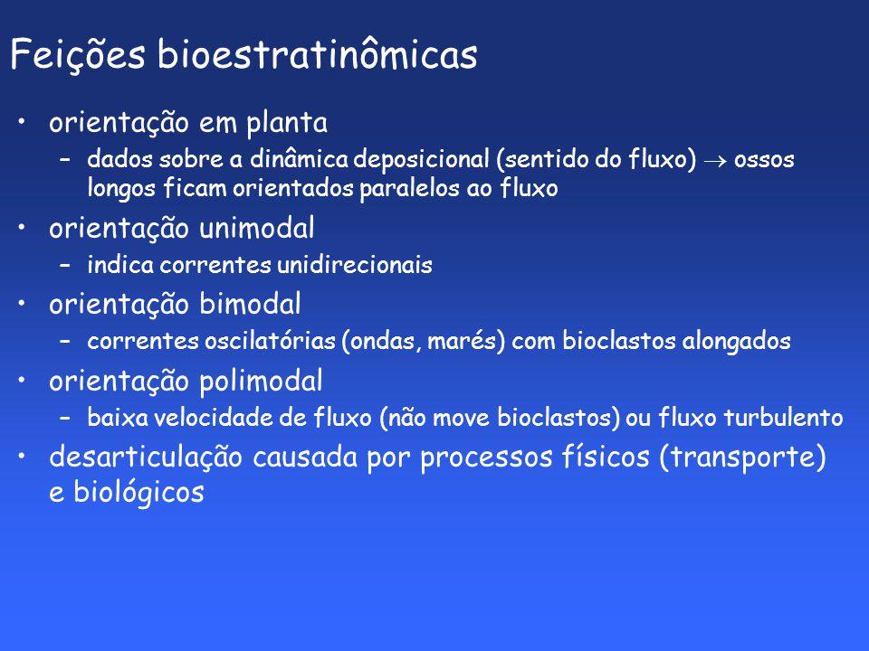 Feições bioestratinômicas