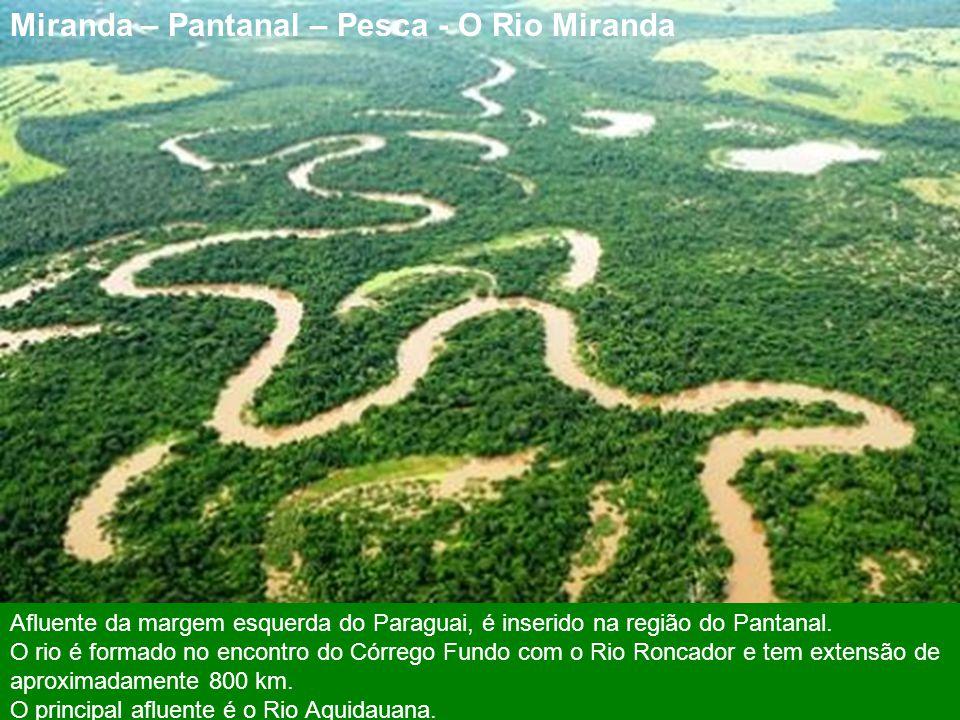 Miranda – Pantanal – Pesca - O Rio Miranda
