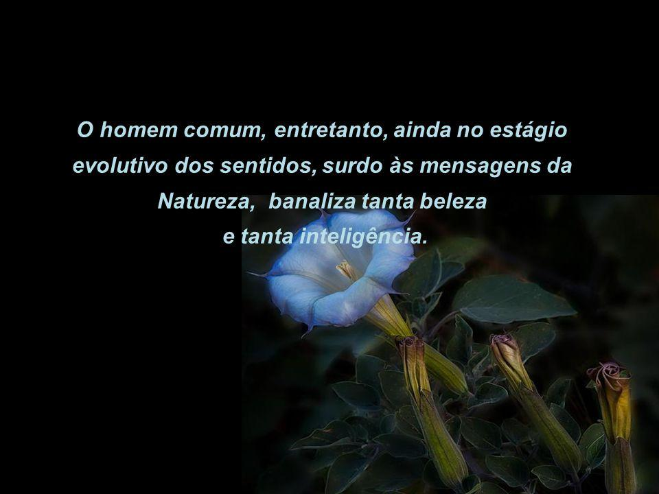 O homem comum, entretanto, ainda no estágio evolutivo dos sentidos, surdo às mensagens da Natureza, banaliza tanta beleza