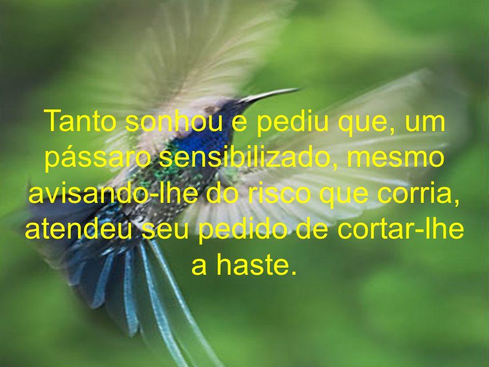 Tanto sonhou e pediu que, um pássaro sensibilizado, mesmo avisando-lhe do risco que corria, atendeu seu pedido de cortar-lhe a haste.