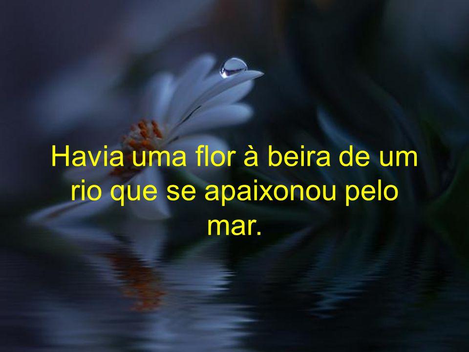 Havia uma flor à beira de um rio que se apaixonou pelo mar.