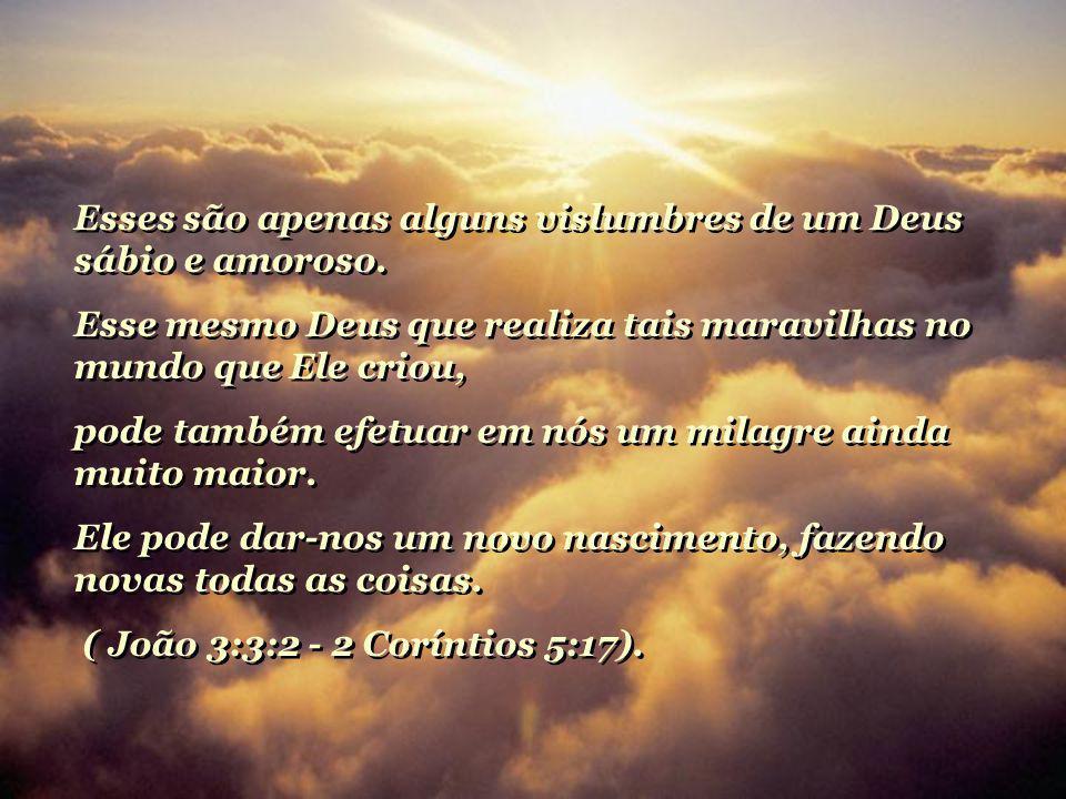 Esses são apenas alguns vislumbres de um Deus sábio e amoroso.