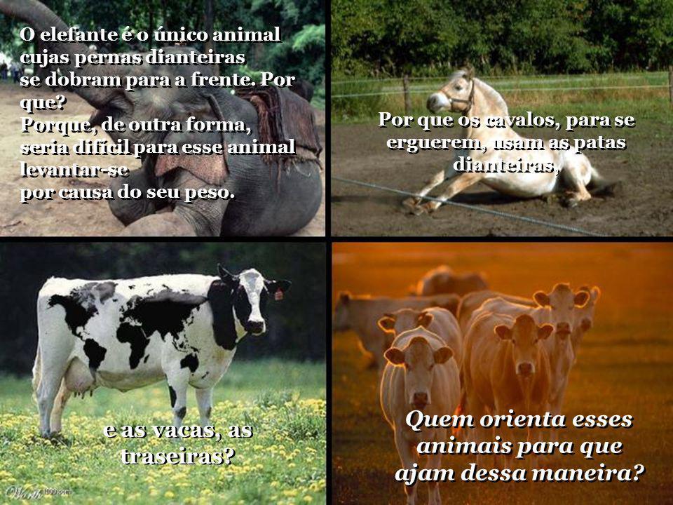 Quem orienta esses animais para que ajam dessa maneira