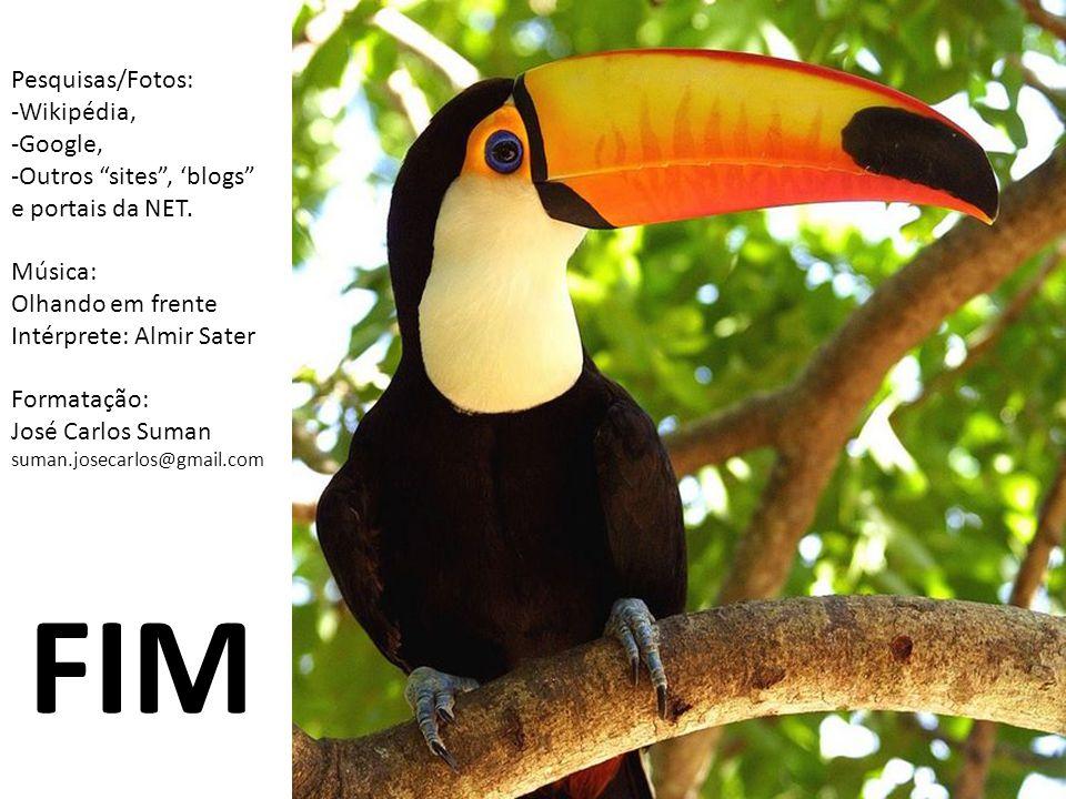 FIM Pesquisas/Fotos: -Wikipédia, -Google, -Outros sites , 'blogs