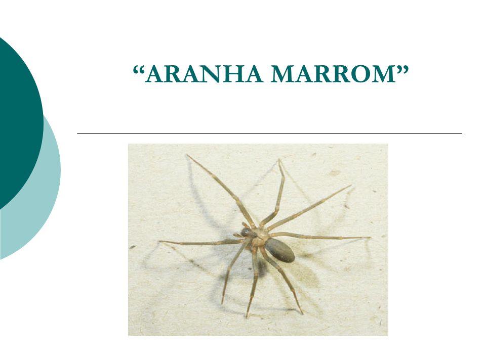 ARANHA MARROM 01.