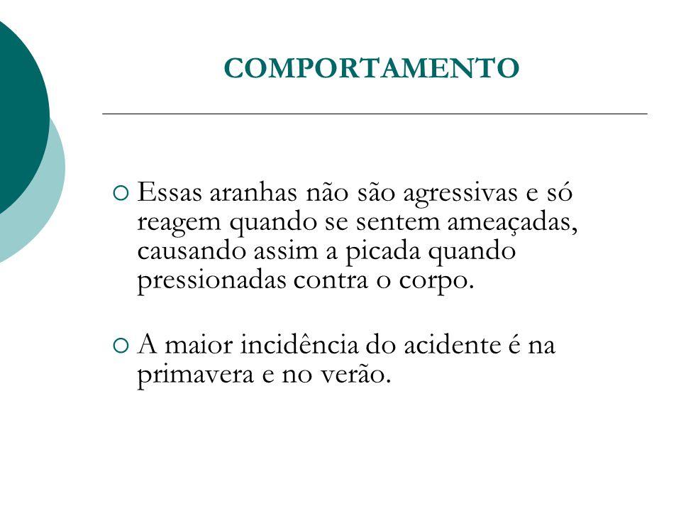 A maior incidência do acidente é na primavera e no verão.
