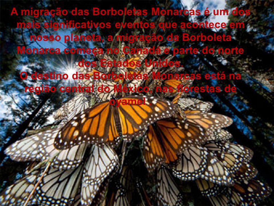 A migração das Borboletas Monarcas é um dos mais significativos eventos que acontece em nosso planeta, a migração da Borboleta Monarca começa no Canadá e parte do norte dos Estados Unidos.