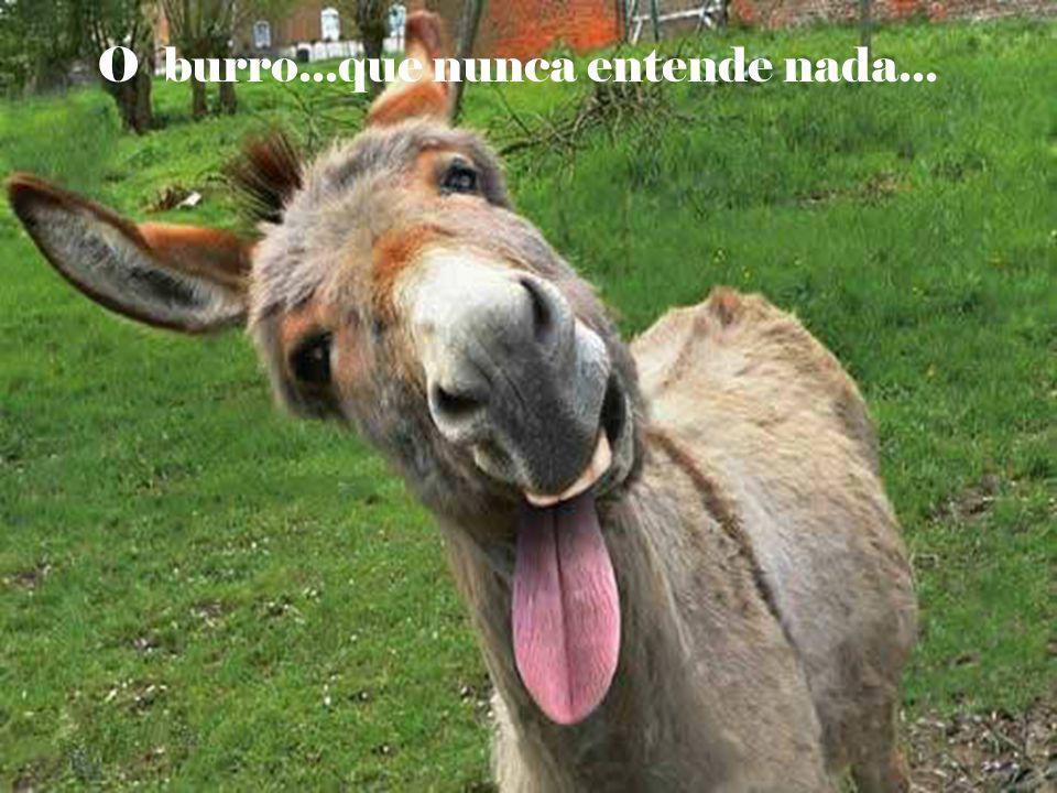 O burro...que nunca entende nada...