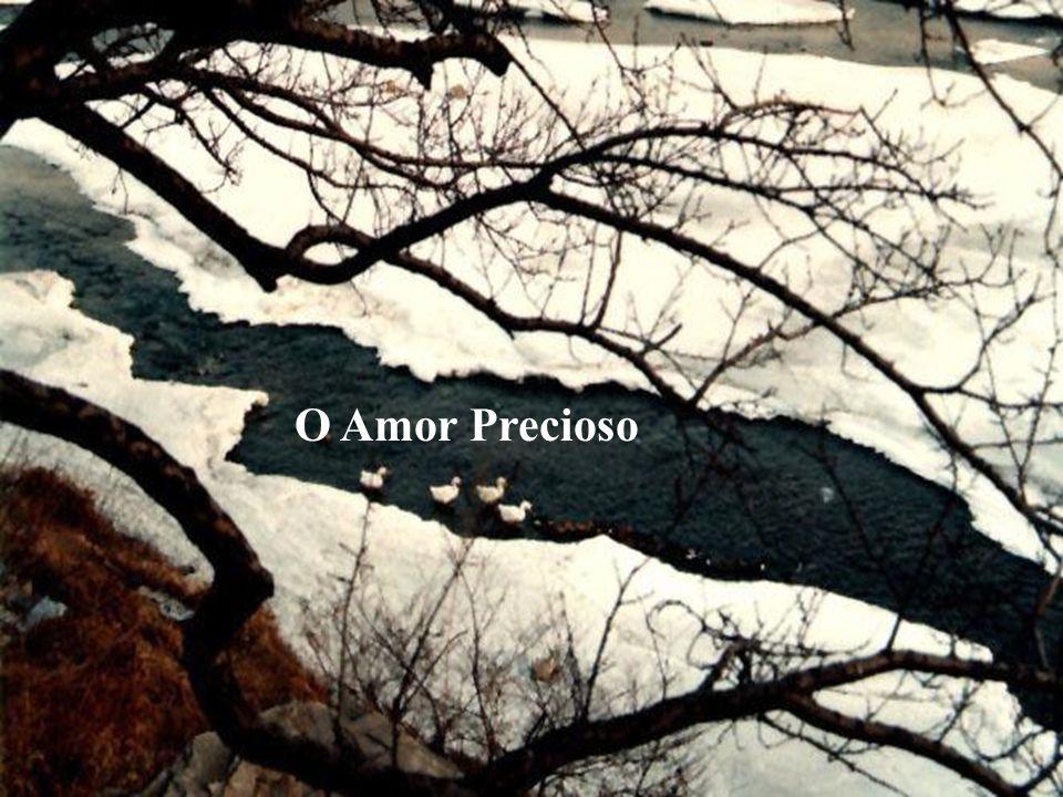 O Amor Precioso