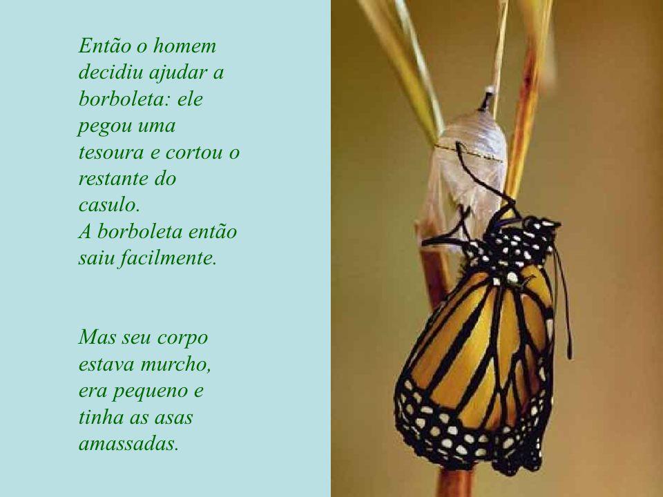 Então o homem decidiu ajudar a borboleta: ele pegou uma tesoura e cortou o restante do casulo. A borboleta então saiu facilmente.
