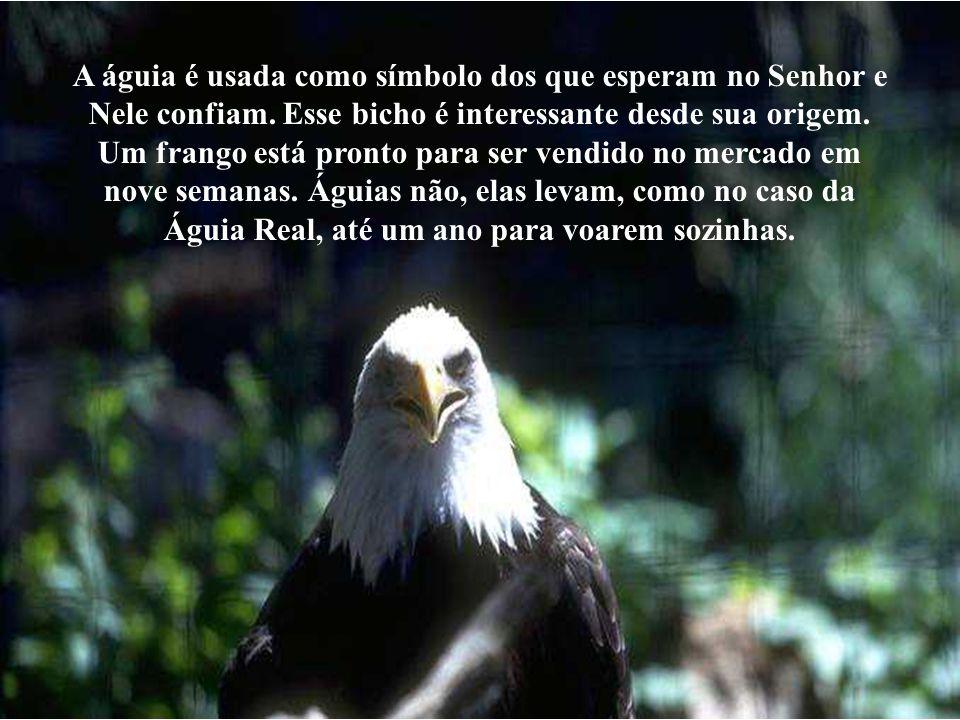A águia é usada como símbolo dos que esperam no Senhor e Nele confiam