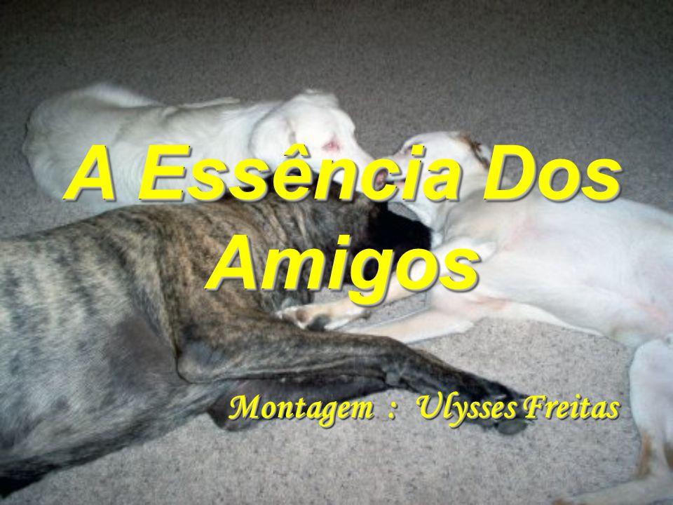 A Essência Dos Amigos Montagem : Ulysses Freitas