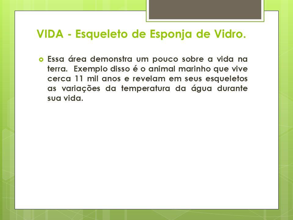 VIDA - Esqueleto de Esponja de Vidro.