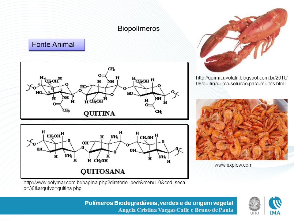 Biopolímeros Fonte Animal
