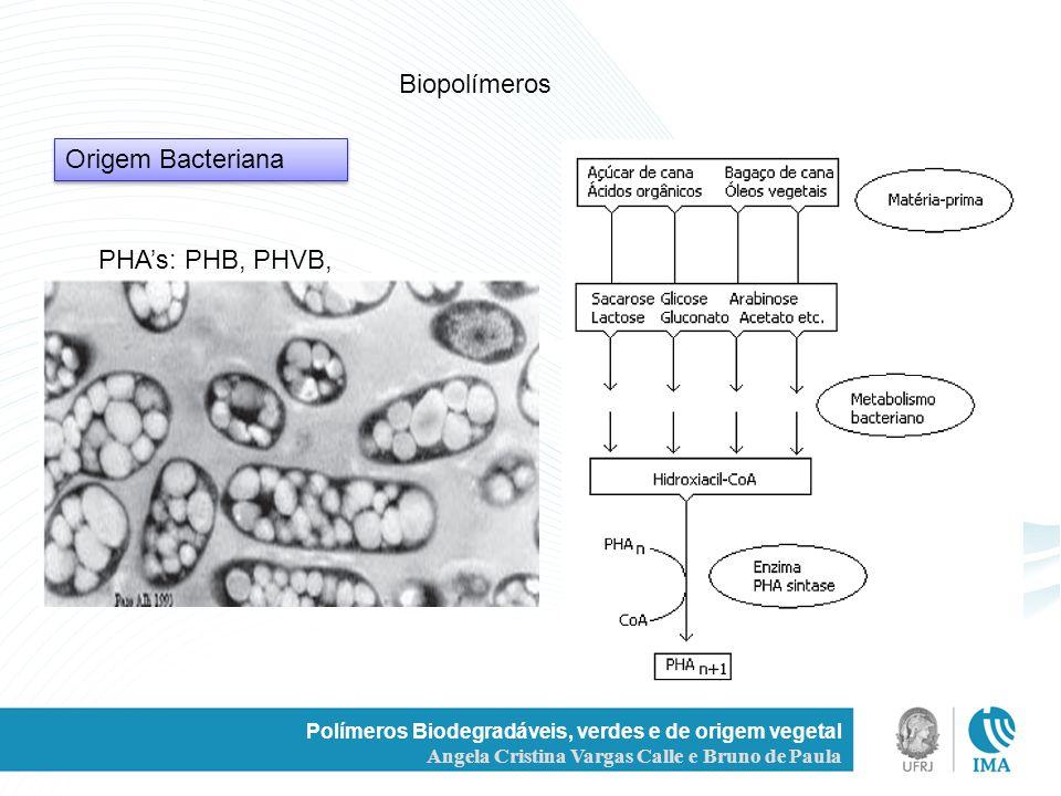 Biopolímeros Origem Bacteriana PHA's: PHB, PHVB,