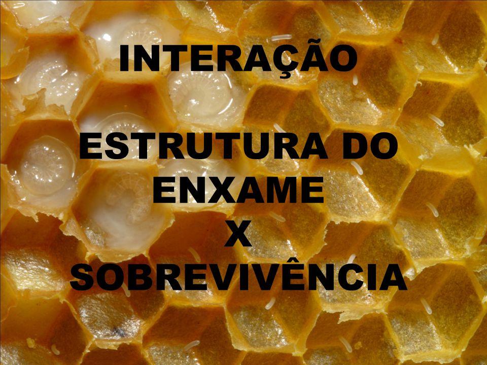 INTERAÇÃO ESTRUTURA DO ENXAME X SOBREVIVÊNCIA