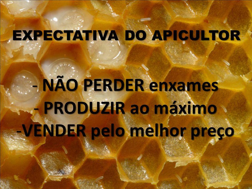 EXPECTATIVA DO APICULTOR