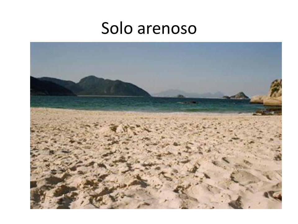 Solo arenoso