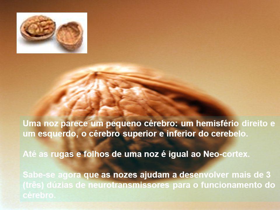 Uma noz parece um pequeno cérebro: um hemisfério direito e um esquerdo, o cérebro superior e inferior do cerebelo.