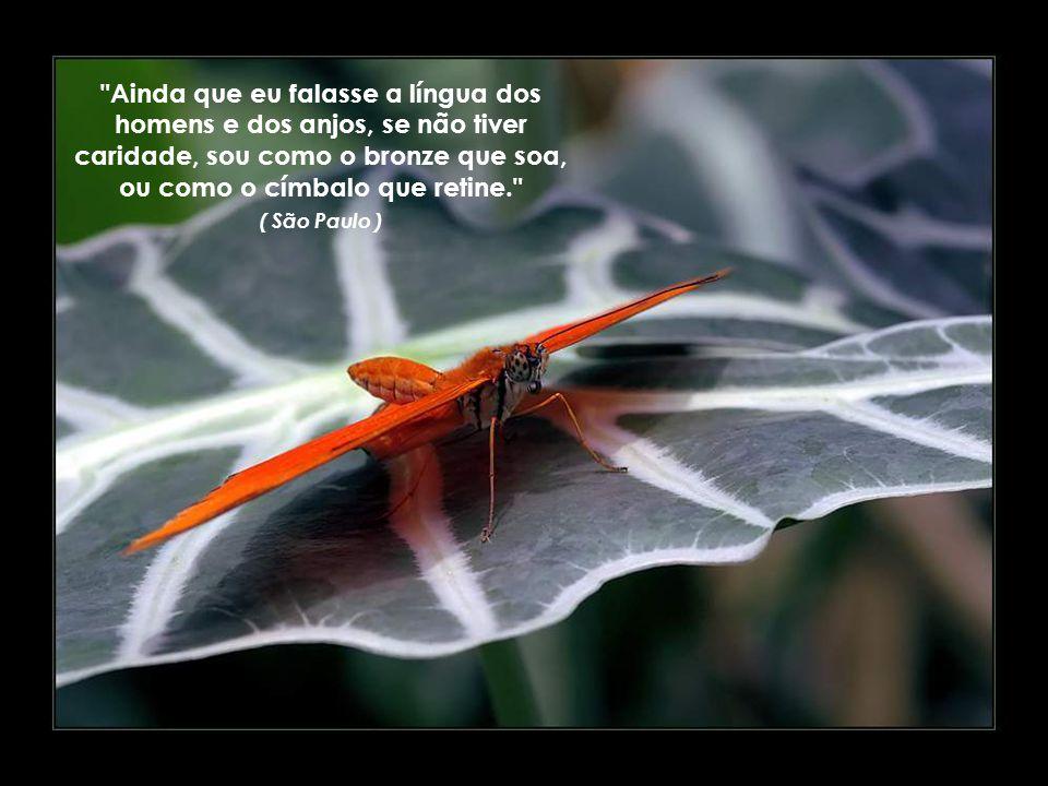 Ainda que eu falasse a língua dos homens e dos anjos, se não tiver caridade, sou como o bronze que soa, ou como o címbalo que retine. ( São Paulo )