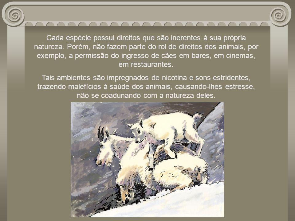 Cada espécie possui direitos que são inerentes à sua própria natureza