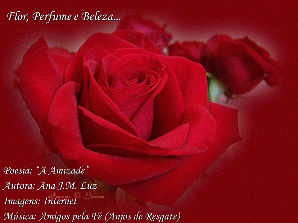 Flor, Perfume e Beleza... Poesia: A Amizade Autora: Ana J.M. Luz