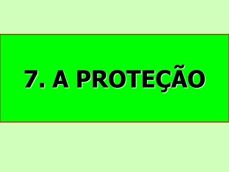7. A PROTEÇÃO