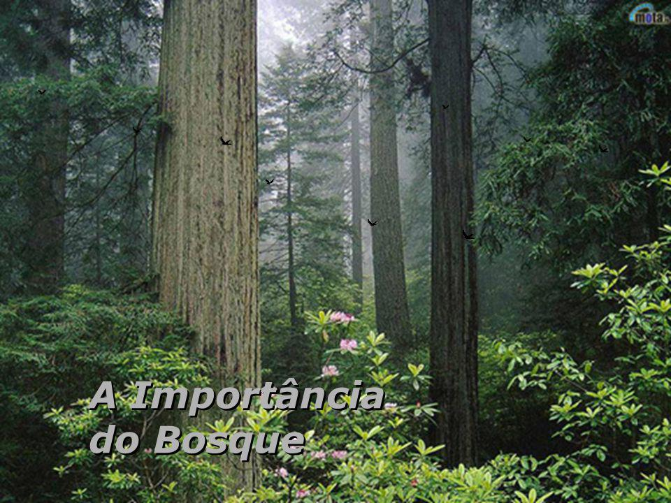 A Importância do Bosque