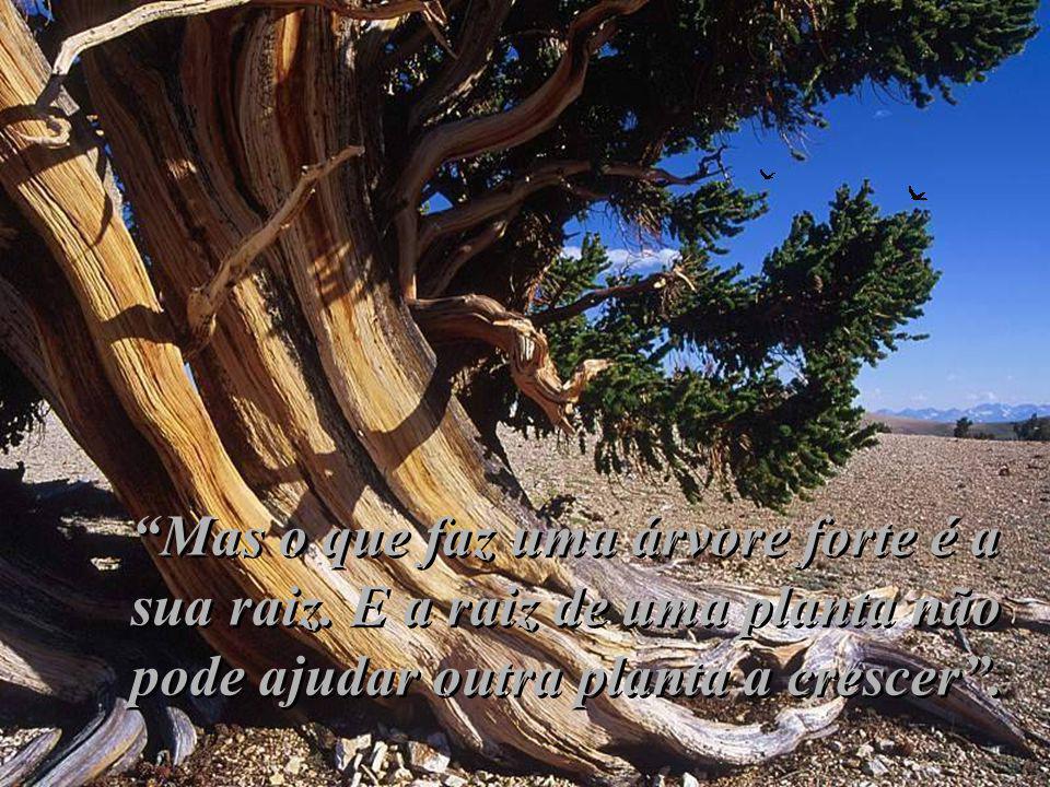 Mas o que faz uma árvore forte é a sua raiz