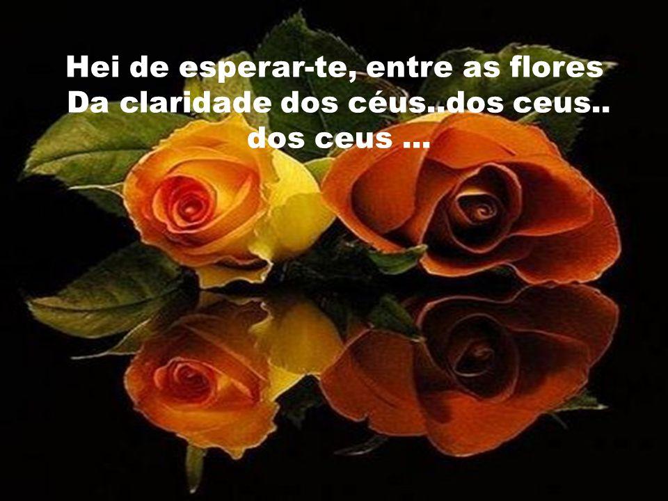 Hei de esperar-te, entre as flores Da claridade dos céus..dos ceus..