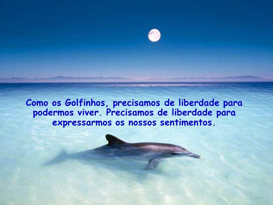 Como os Golfinhos, precisamos de liberdade para podermos viver.