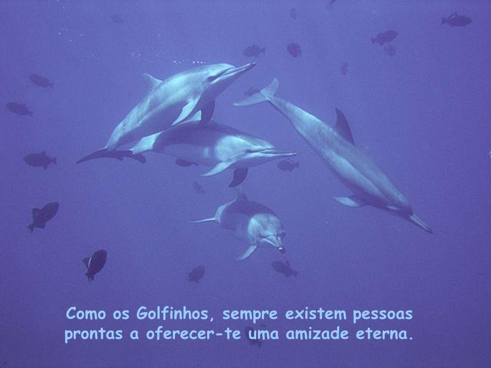 Como os Golfinhos, sempre existem pessoas prontas a oferecer-te uma amizade eterna.