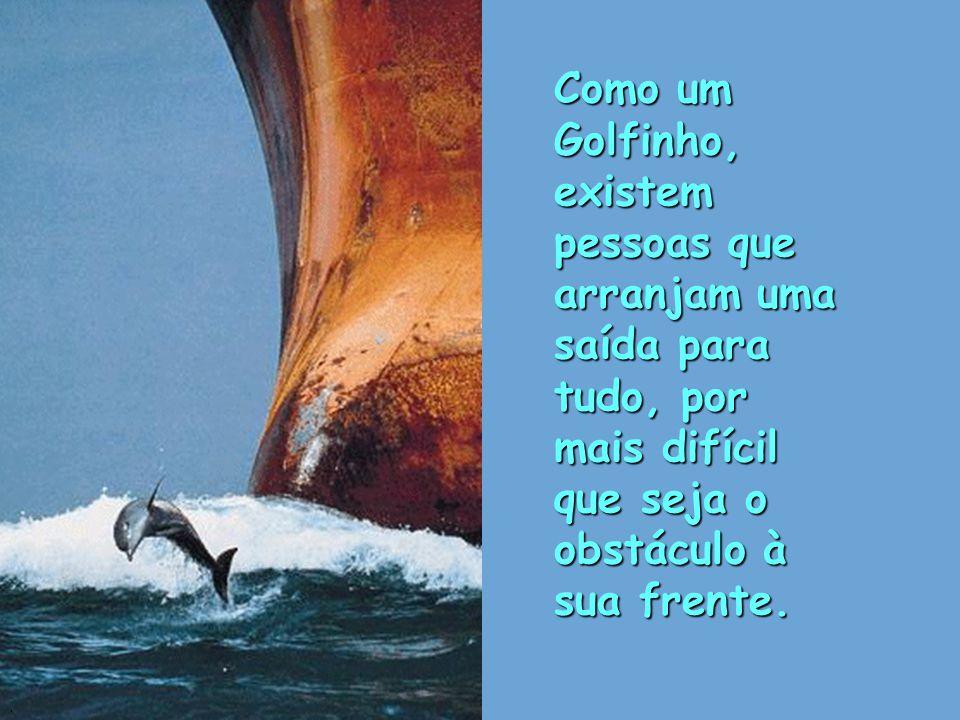 Como um Golfinho, existem pessoas que arranjam uma saída para tudo, por mais difícil que seja o obstáculo à sua frente.